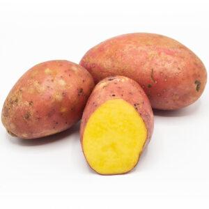 Kartoffeln Sorte Laura vorwiegend-festkochend