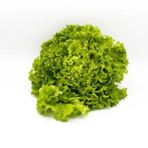 Lollo Bionda / Batavia grün